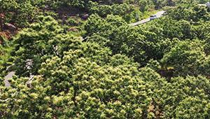 Landschaft der Kastanienwälder in Chinas Hebei