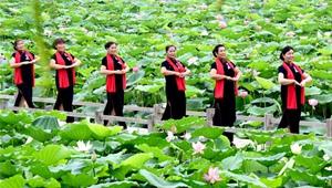 Touristen bewundern Lotusblüten in Henan