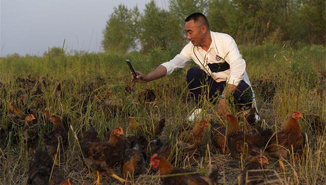 Hühnerzüchter im Nordosten Chinas erfreut sich im Internet zunehmender Beliebtheit