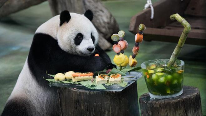 Riesenpanda Yuan Zai genießt besondere Geburtstagstorte in Taipeh