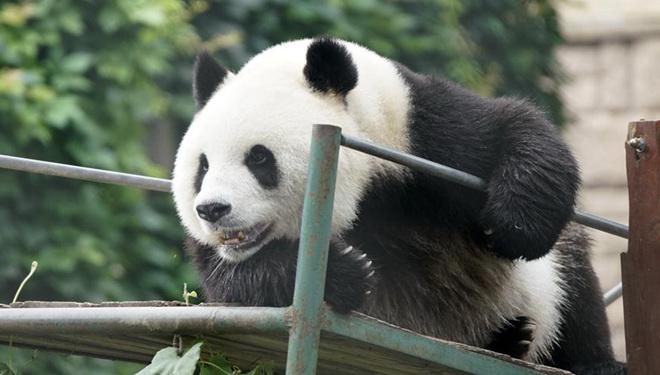 Beijinger Zoo bereitet Einrichtungen gegen Sommerhitze für Tiere vor