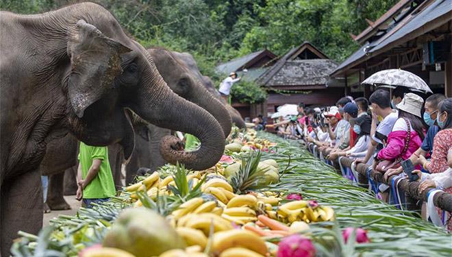 Chinas Yunnan feiert Weltelefantentag