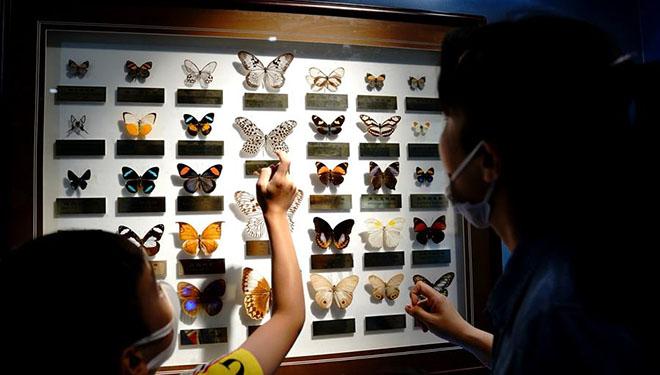 Entomologisches Museum Shanghai bietet während des Wissenschaftsfestivals Shanghai thematische Aktivitäten für Öffentlichkeit an