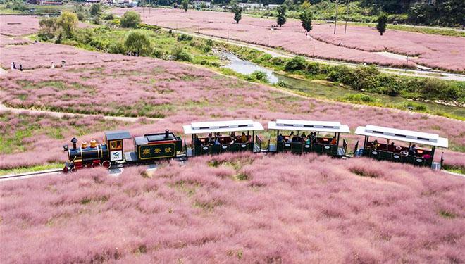 Touristen haben Spaß im Blumenmeer in Guizhou
