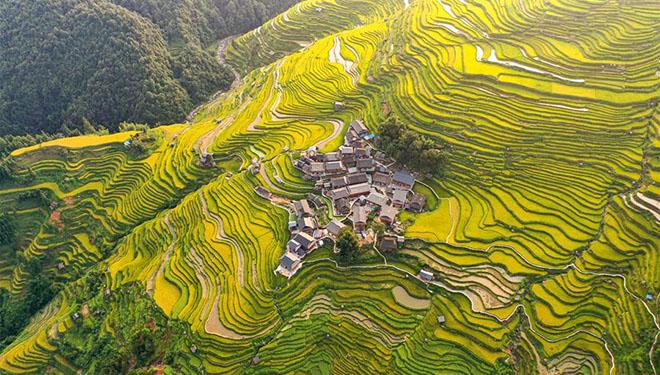 Landschaft der Terrassenfelder in Chinas Guizhou