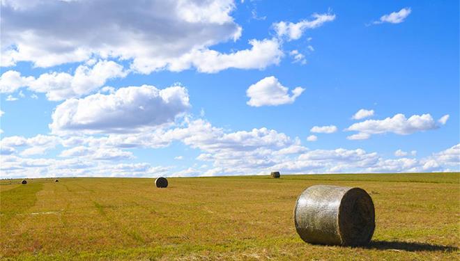 Hirten mähen Gras in Innerer Mongolei