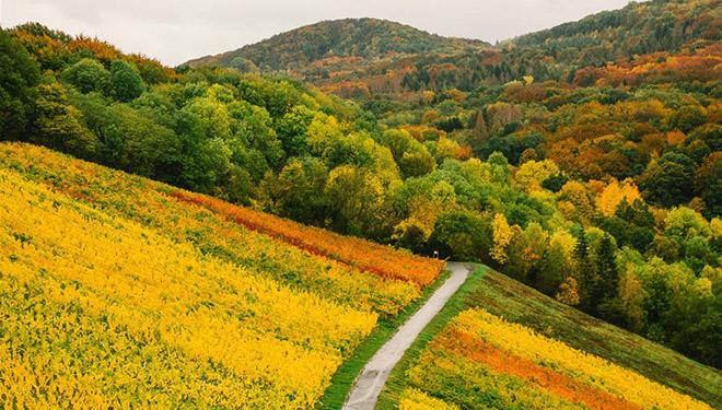 Herbstlandschaft in Königswinter von Deutschland