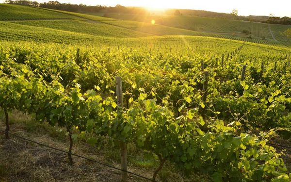 Australische Weinmarke hofft auf weiteren Erfolg bei 3. CIIE