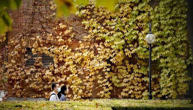 Goldener Herbst an der Tsinghua-Universität