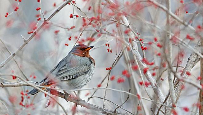 In Bildern: Vögel im Renmin-Park in Zhangjiakou