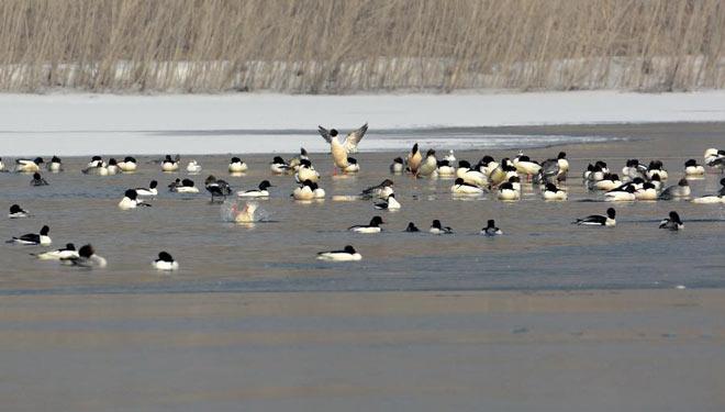 Wildvögel ruhen sich am Yongding-Fluss aus