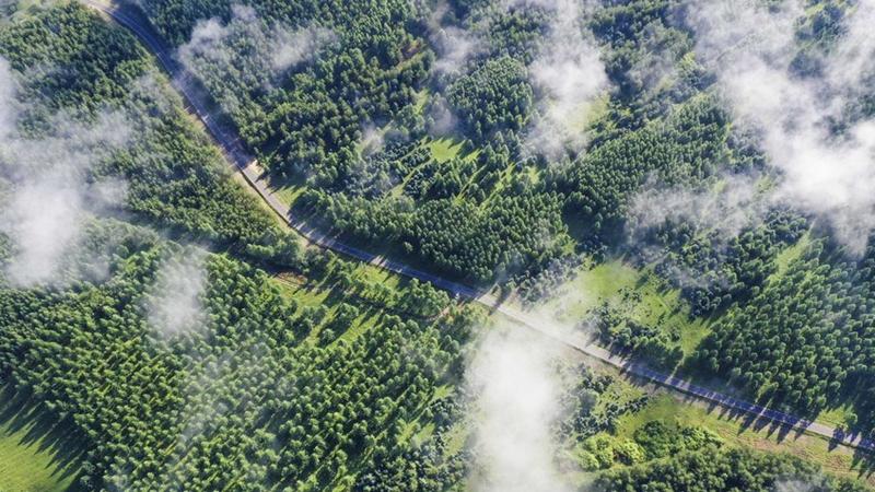Waldbestand und Grasland in der nordchinesischen Provinz Hebei wachsen