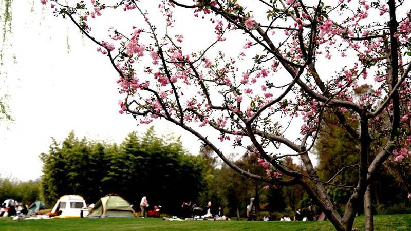 Menschen genießen Freizeit im Botanischen Garten Shanghai-Chenshan