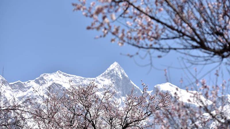 19. Pfirsichblütenfest findet in Nyingchi in Chinas Tibet statt