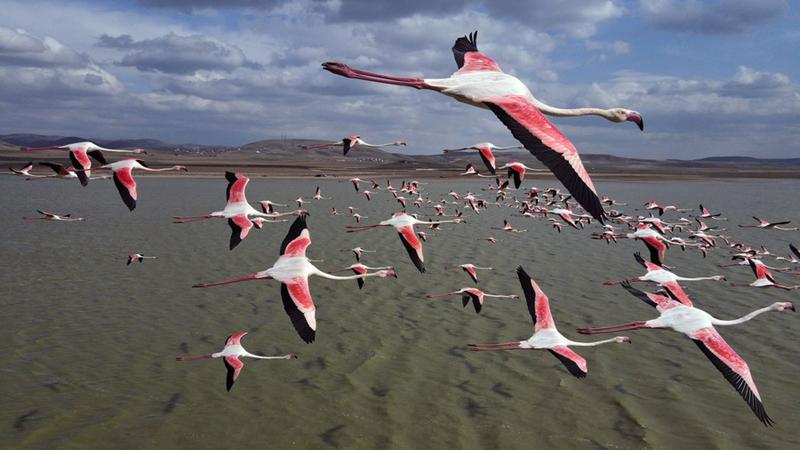Flamingoschwärme in der Türkei sorgen für Aufsehen
