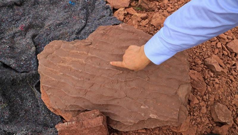 """""""Dinosaurier-Tanzfläche"""" in Fujian entdeckt"""